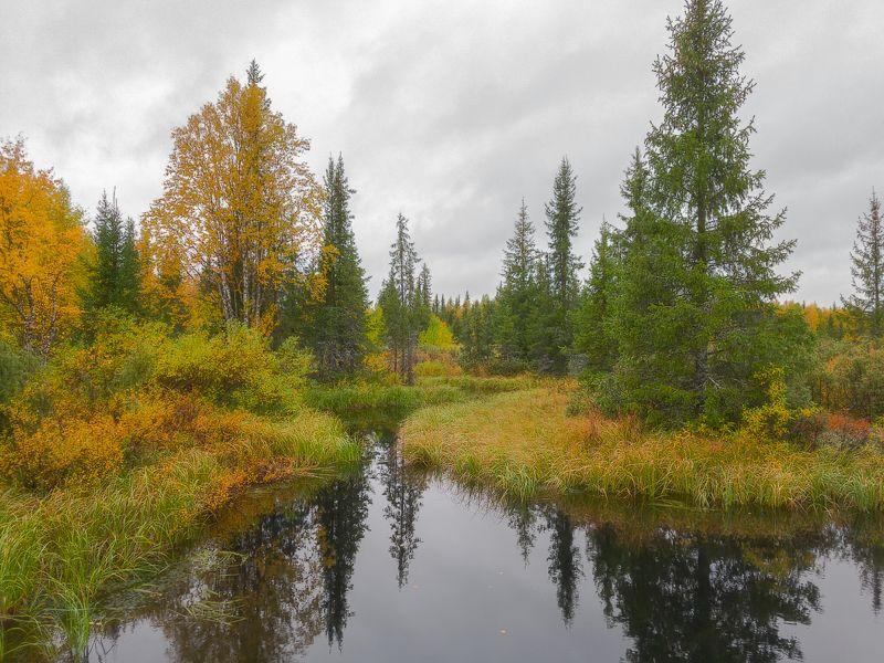 печора,коми,лес,осень,золотая,мобильноефото Осень севераphoto preview