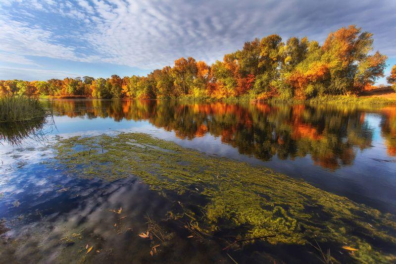 Осенняя палитра красокphoto preview