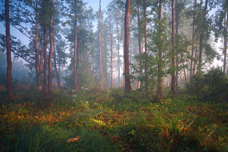 Осенний лес.photo preview