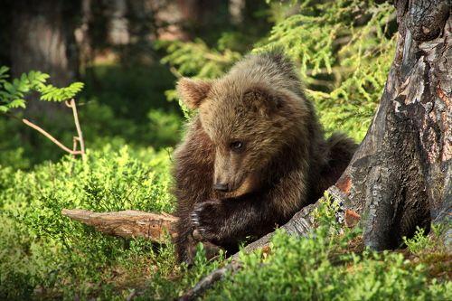 Медвежьи истории - 3