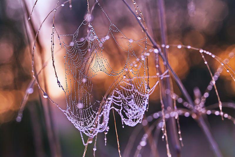 паутина, макро, роса, утро, природа О паутинах сентябряphoto preview
