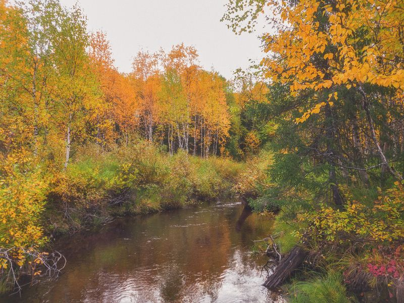 инта,золотая осень,лес,коми,мобильное фото Осенний северphoto preview