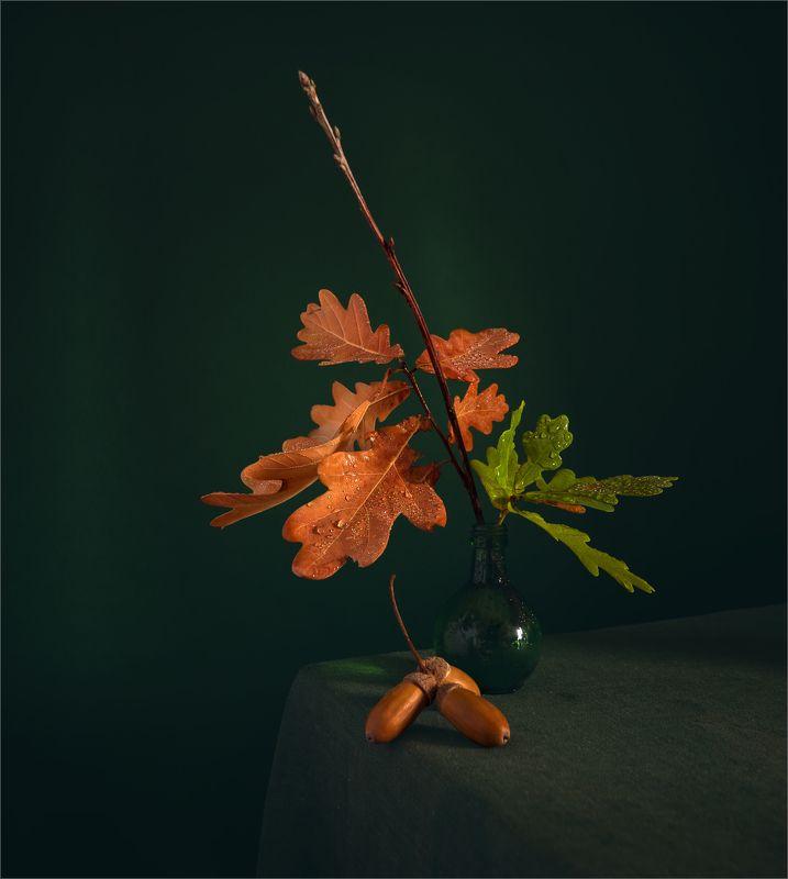 still life, натюрморт,    растение, природа,  винтаж, ветка, дуб, желуди,  минимализм, листья, капли натюрморт с дубовой веточкой и желудямиphoto preview