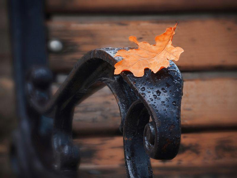 Осень в городском паркеphoto preview