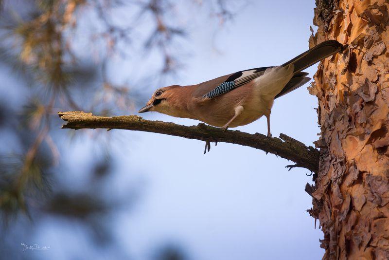 природа, лес, животные, птицы ... что-то где-то дают !!!photo preview