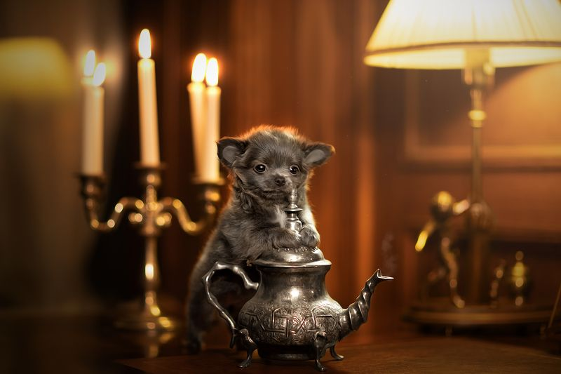 Лампа Алладина:))))photo preview