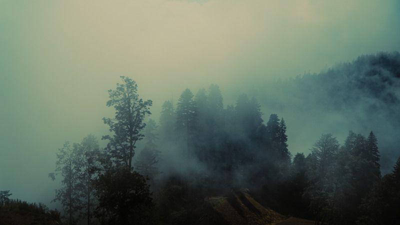 fog, volume, light, forest, tress, myst, shadows, landscape, colors, colorgrade, colorgrading, film, cine, cinematic, sochi, rosa khutor Fog in a forestphoto preview