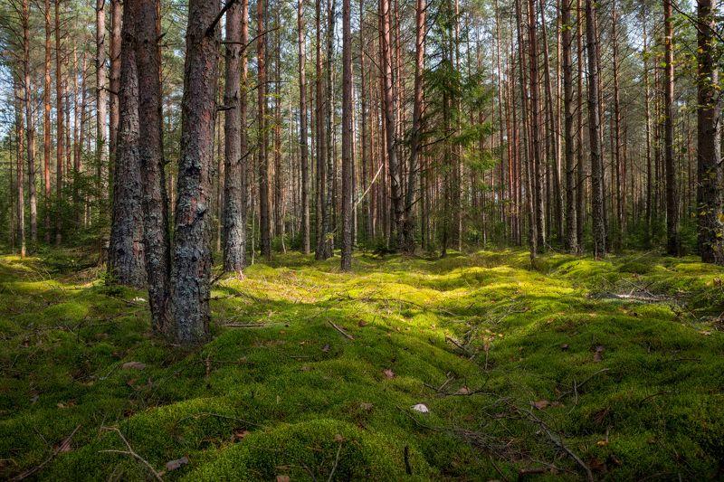 осень, лес,мох, деревья, Леснаяphoto preview