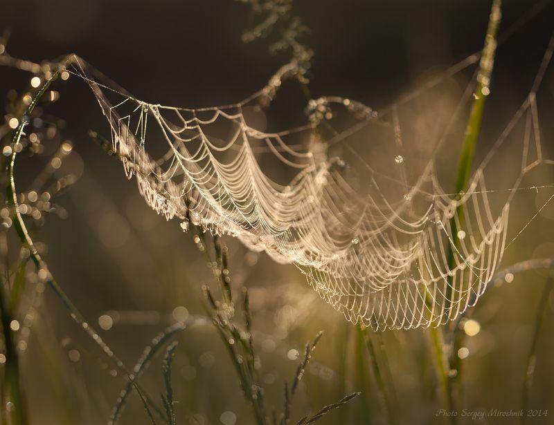 макро, паутина, весна, май, красиво, паук, утро, роса, украина Майская паутинаphoto preview