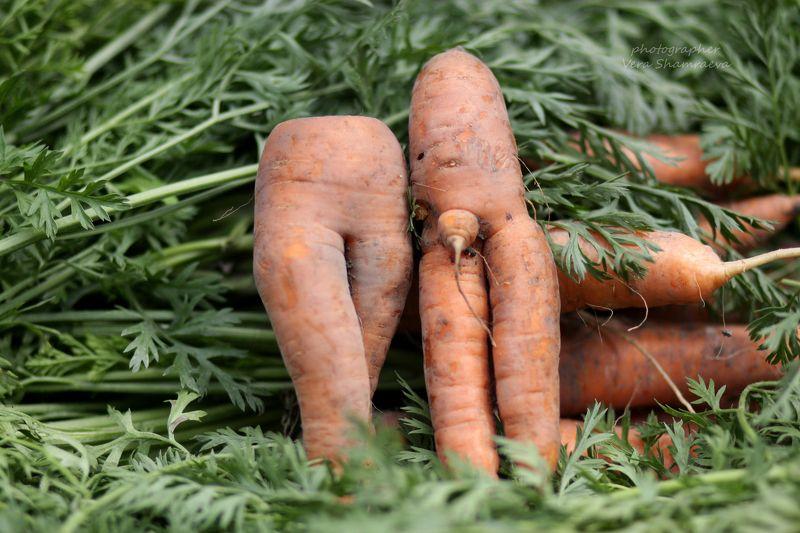 морковь, юмор Морковный стиль)))photo preview