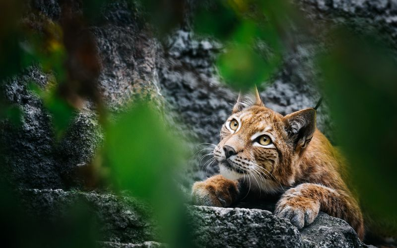 animals, nature, travel, life, cats Засадаphoto preview