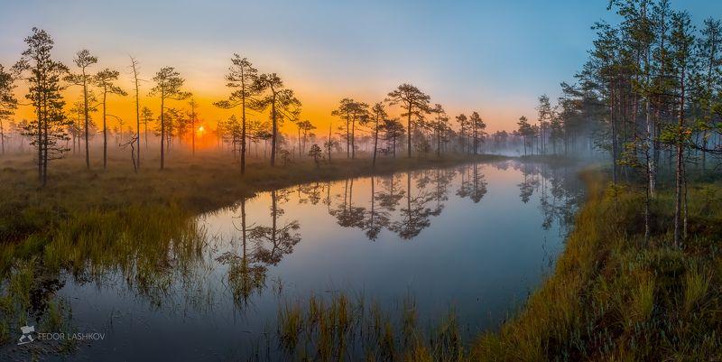 фототур, ленинградская область, деревья, сосна, рассвет, туман, отражение, покой, озеро, заря, лето, небо, солнце, Та самая магия Ленобластиphoto preview