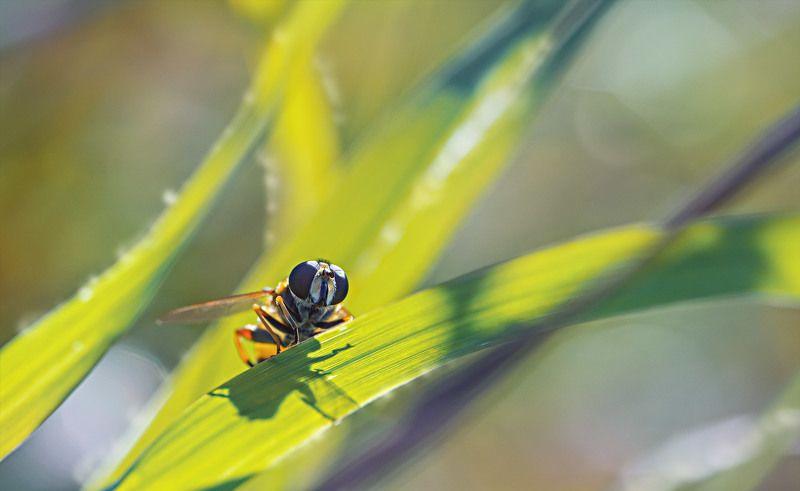 цветы,солнце,лучи,листья,трава,желтый,голубой ***photo preview
