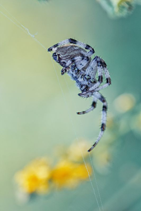 паук,лапы,дерево,цвет,осень,зелень,листва,трава ***photo preview
