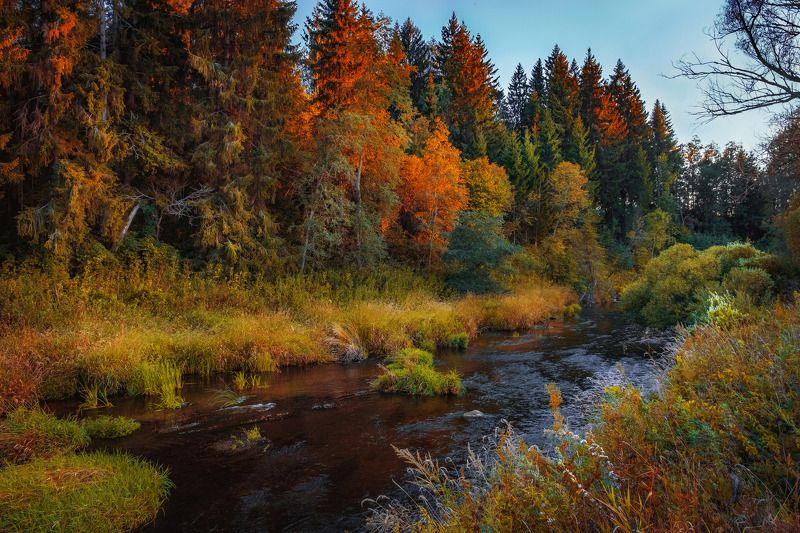 пейзаж, закат, лес, осень По мотивам Шишкинаphoto preview