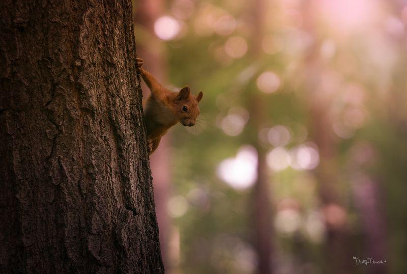 природа, лес, животные, птицы Любопытный малышphoto preview