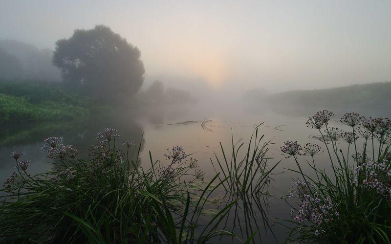 утро, туман, река, упа, якшино, пейзаж Когда цветёт сусакphoto preview