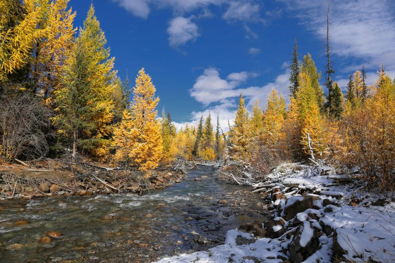 Осень в снежно-золотомphoto preview