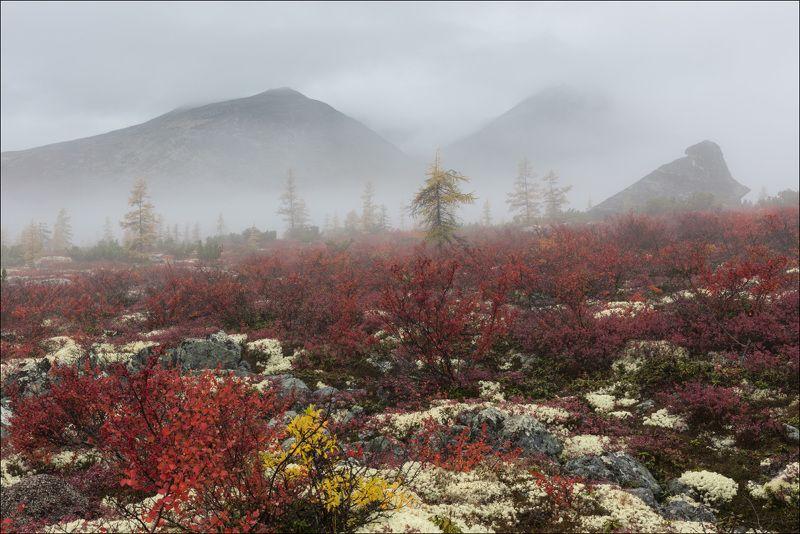 На туманном платоphoto preview