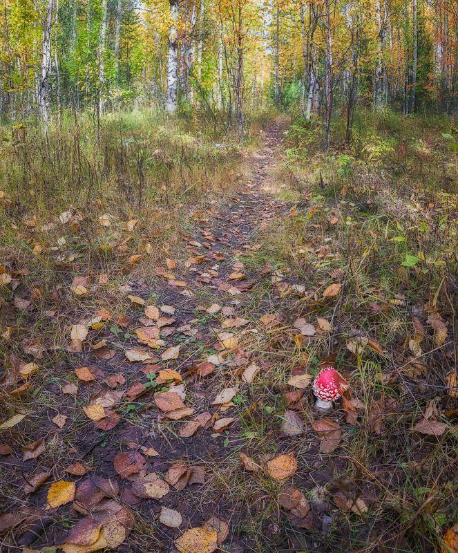 печора,коми,лес,осень,золотая,мобильноефото Осенняя тропаphoto preview