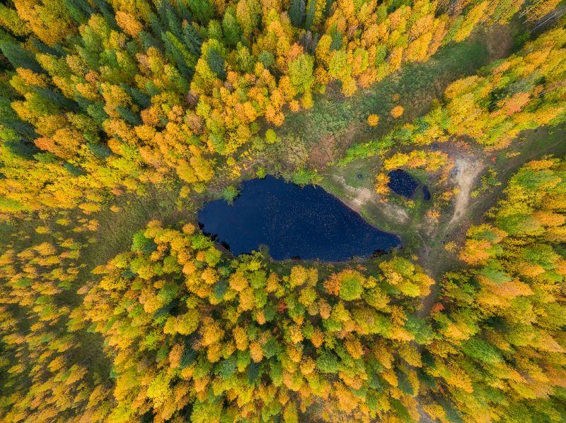 печора,коми,лес Осенний китphoto preview