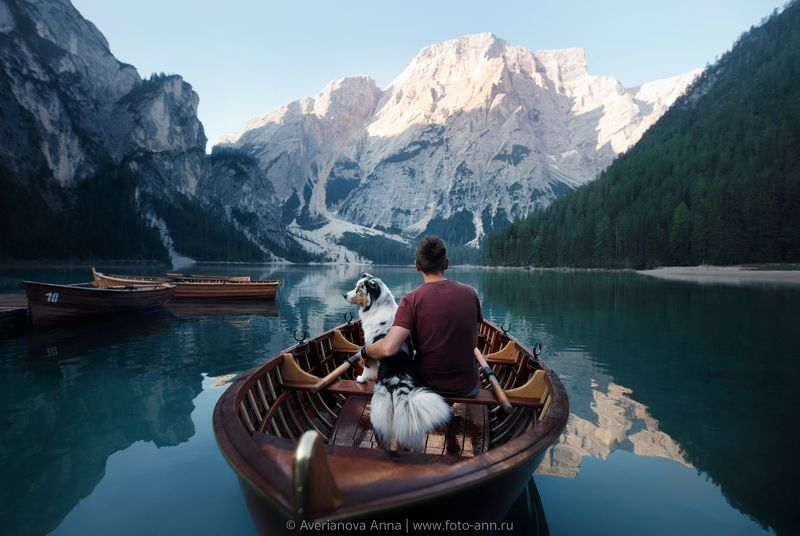 собака, природа, горы, путешествие  photo preview