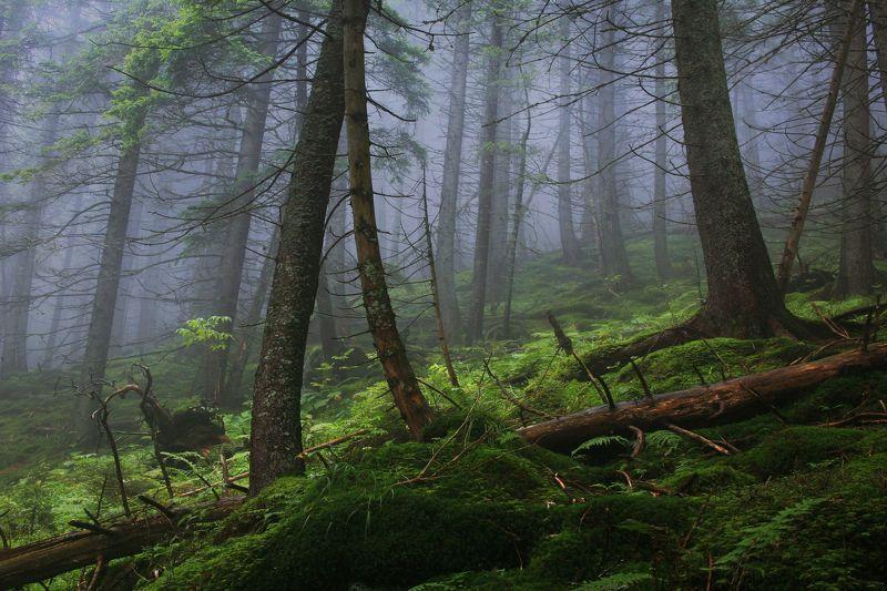 В сказочном лесуphoto preview
