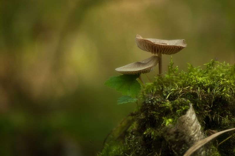 макро,лес,природа,грибы,осень лесные зарисовкиphoto preview