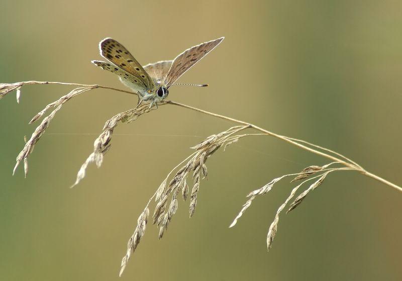 Бабочка, капля дождя Ой, кажется дождь начинается!photo preview