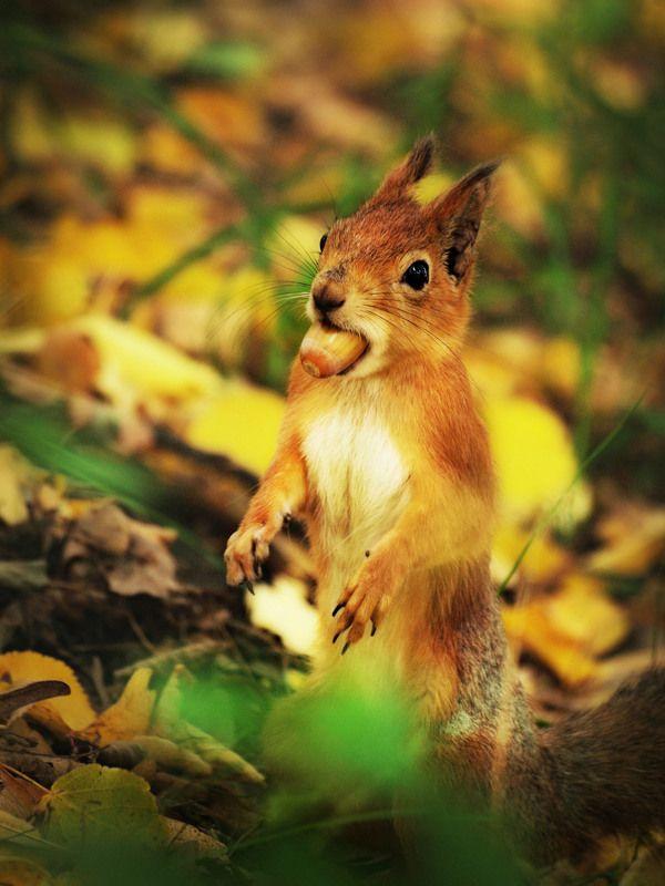 животные, белка, пленэр, жёлудь Вкусный жёлудьphoto preview