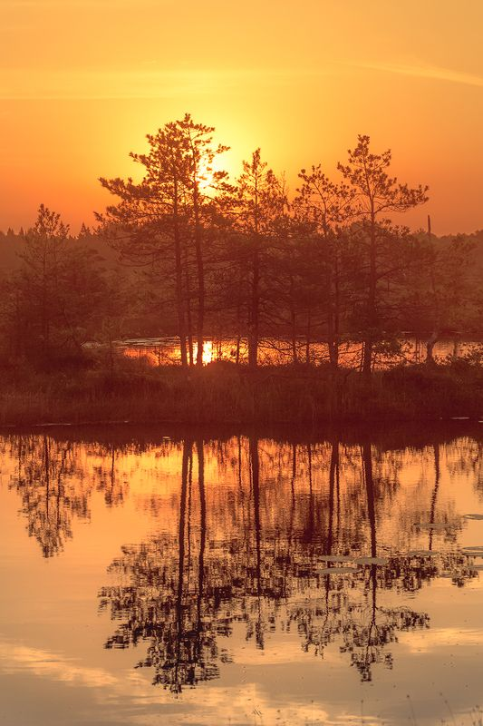 landscape, sunrise, colors, lithuania, marsh, reflection Silence of the marshphoto preview