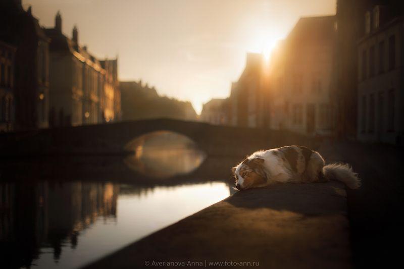 собака, природа, город  Грустьphoto preview