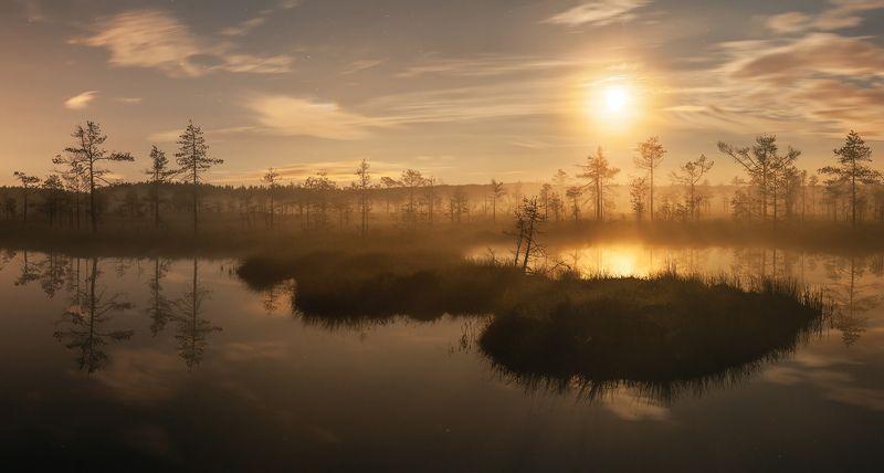 ленинградская область, ленобласть, болото, болота ленинградской области, фотопроект, мир болот \