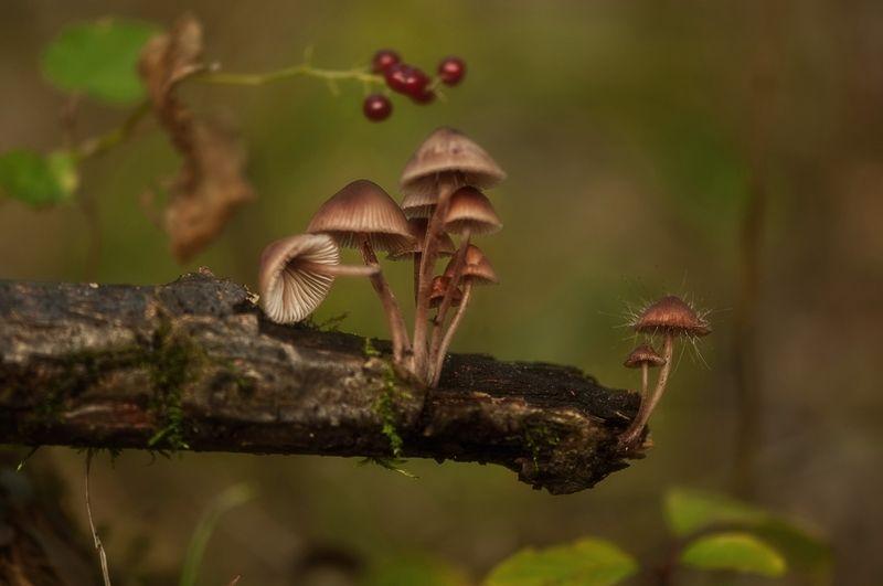 макро,лес,грибы,поганки,осень эквилибристы ))photo preview