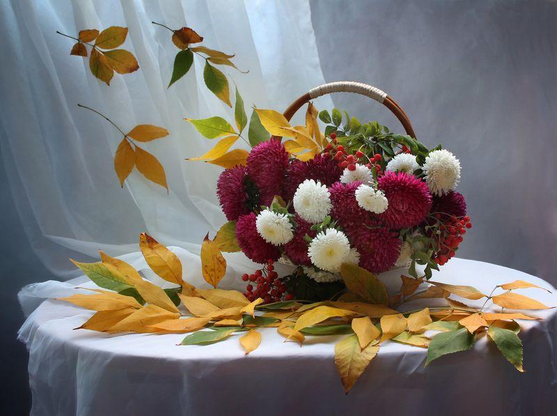 осень, натюрморт, цветы, листья, астры Осенний ноктюрн...photo preview
