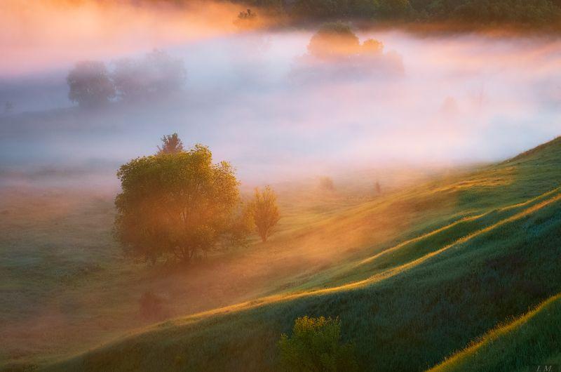 деревья, лето, рассвет, свет, солнечный свет, туман, Утро, холмы, цвета, вид сверху, hills, trees, Misty, colors, view, sunlight, foggy, fog, Landscape, light, morning, nature, Summer, sunrise, линии света ..photo preview