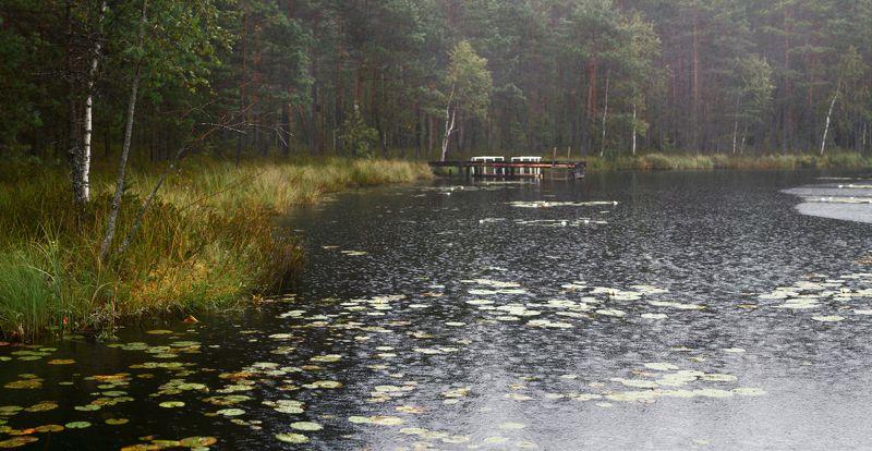 питер, пейзаж, озеро, луга На лесном озере...photo preview