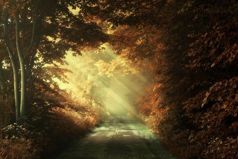 autumn road fall jesien path mist foggy dranikowski trees осенняя дорога light Autumn road..photo preview