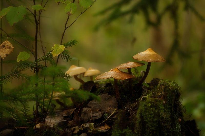 макро,лес,грибы,поганки,осень ...photo preview