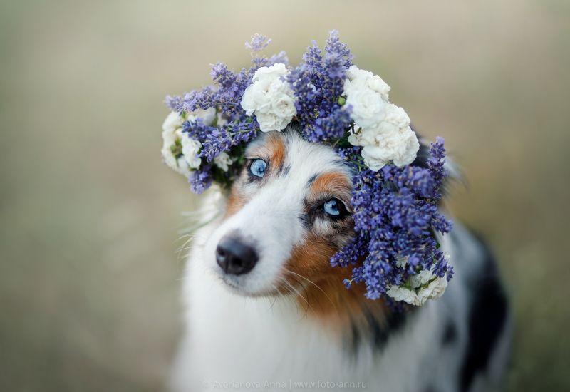 собака, портрет, природа, лето Милая photo preview