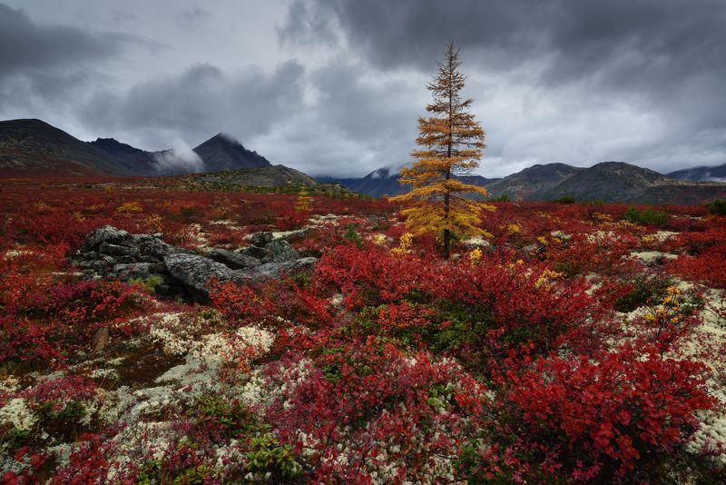 Такая вот осень....photo preview