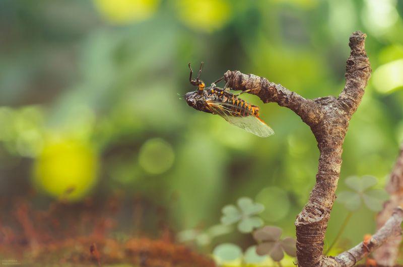 макро, природа, растения, мох, насекомые, цикада, боке, macro, nature, plants, moss, insects, cicada, bokeh, путешествие в макро лесуphoto preview