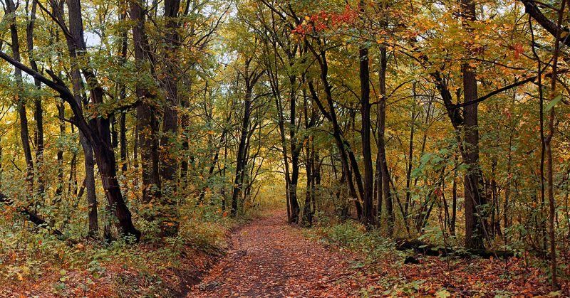 лес,лист,листья,дерево,желтый,ветки,дорога,тропа Осенний лесphoto preview