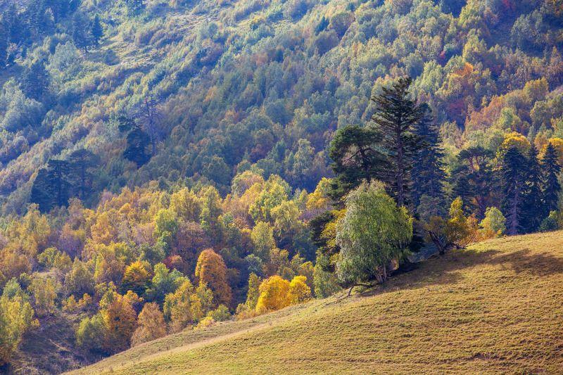 кчр, архзыз,осень ,горы ,кавказ Осень в Архызе ...photo preview