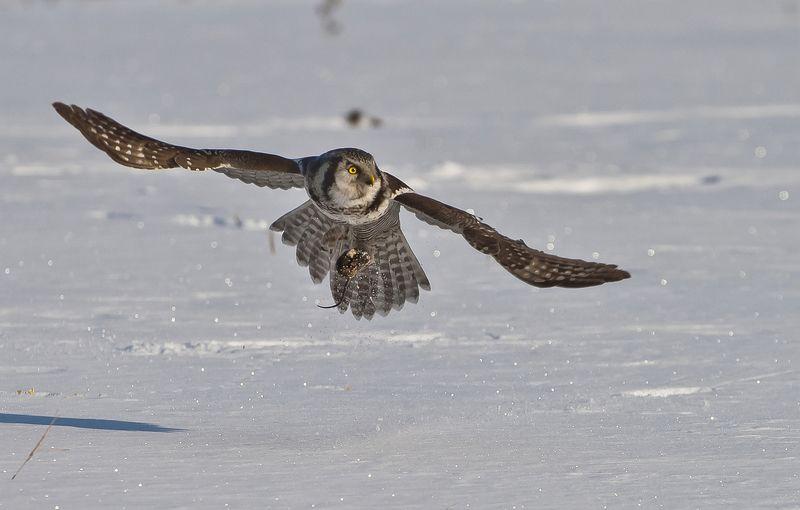 Зимняя охотаphoto preview