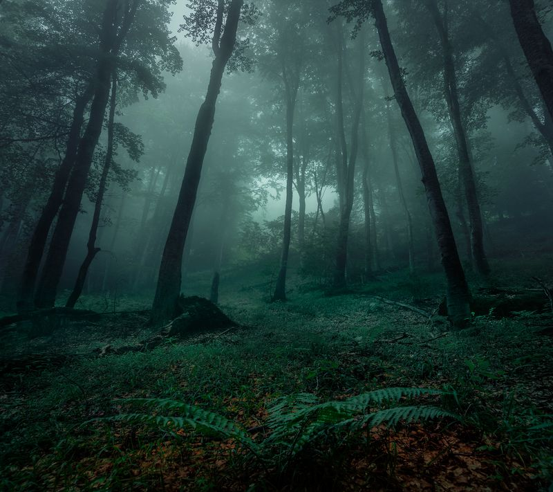 landscape nature scenery forest wood mist misty fog foggy mountain vitosha bulgaria туман лес Misty forest timephoto preview