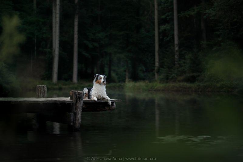 собака, природа, озеро, лес  на озереphoto preview