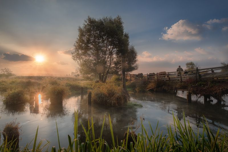 пейзаж, филипповское, рассвет, мост, река, шерна, поле, туман, дерево, коровы, пастух Утро в Филипповскомphoto preview