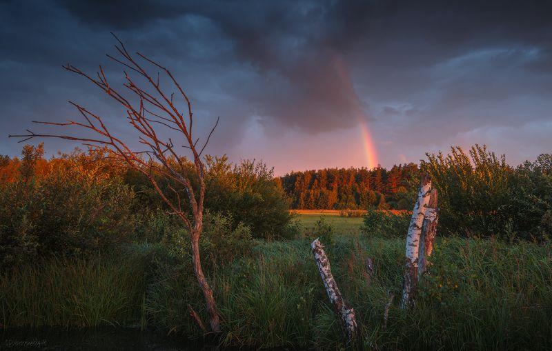 радуга, болото, вечер, лето, тучи, гроза, закат Сказка летнего вечераphoto preview