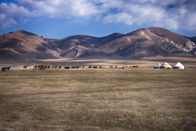 кыргызстан, горы, сон-куль,лошади Лошади Сон-Куляphoto preview
